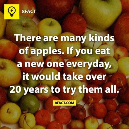 314725-unbelievable-facts-about-apples.png